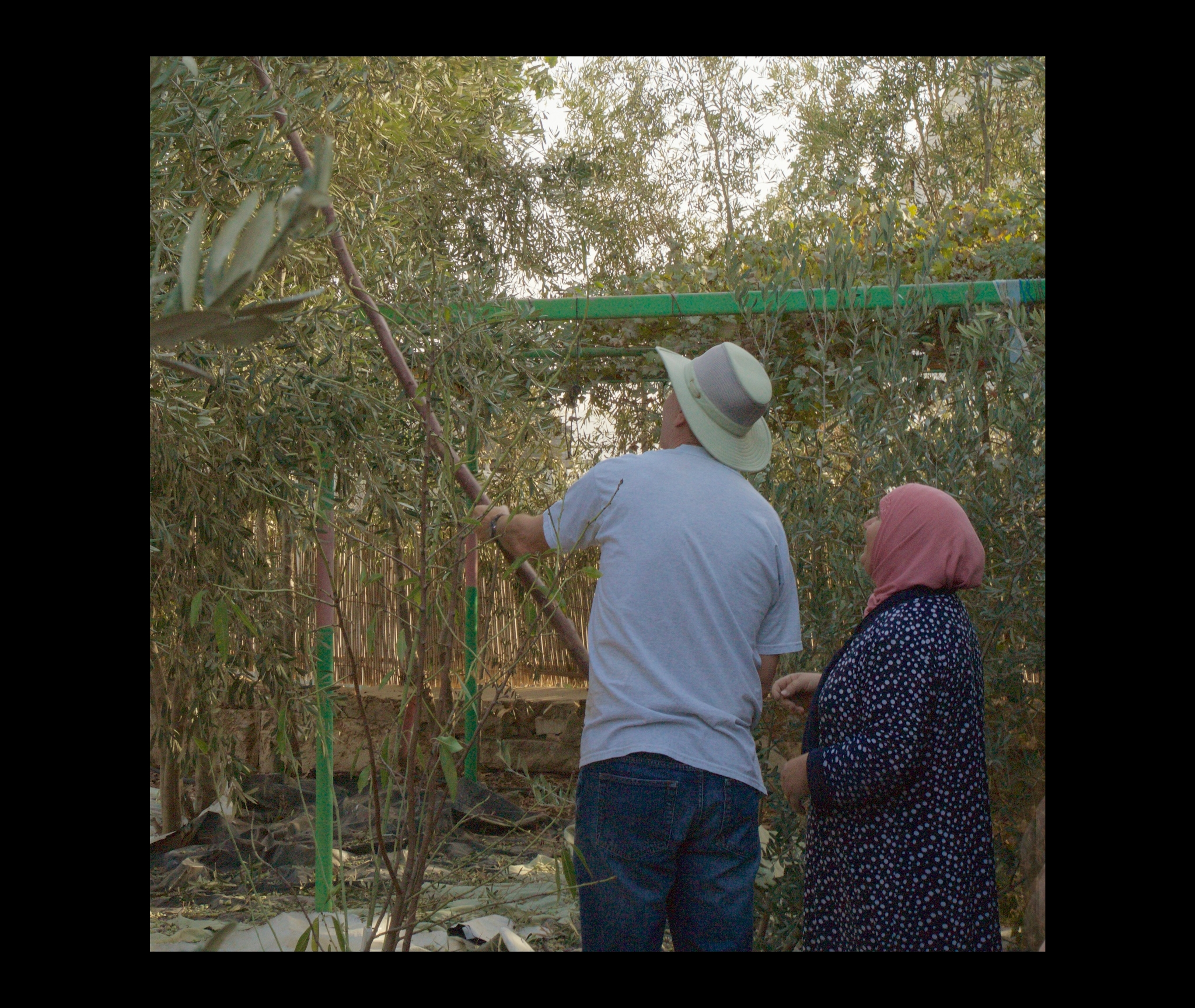 homestay with Remah Abbas and her husband Ahmid. Burkin, Palestine. 56659